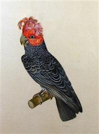 parrot by la roche laffitte