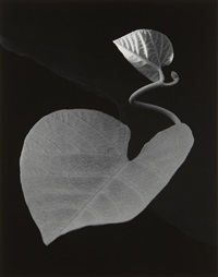 two leaves by paul caponigro