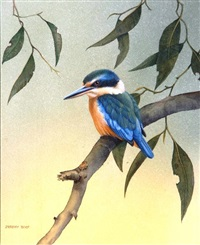 kingfisher by jeremy t. boot