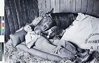 horse trainer tommy woodcock and
