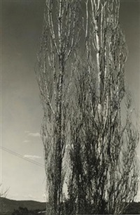 the two poplars, lake george and the dying chestnut tree (2 works) by alfred stieglitz