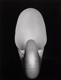 nautilus shell by edward weston
