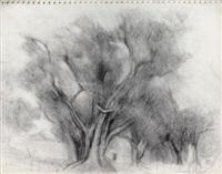 les grands arbres by dora maar