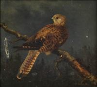 mehiläishaukka by reinhold fabritius