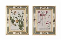 flowers from phytanthoza iconographia (10 works) by johann wilhelm weinmann