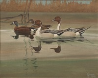 pintails and teal by francis lee jaques