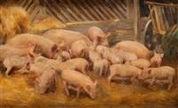 świnki by aleksander augustynowicz