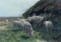 lambs near fold by willem steelink