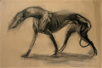 whippet by nicola hicks