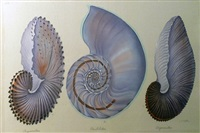 shells by la roche laffitte