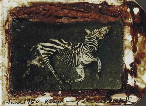 zebra june by peter beard