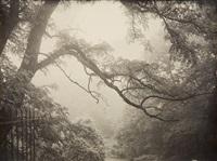une branche by léonard misonne