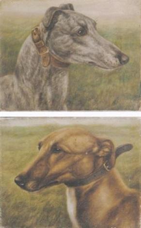 the celebrated greyhound fullerton by edward aistrop