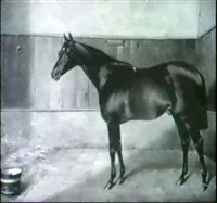 chestnut hunter in a loose stall by j. mathews