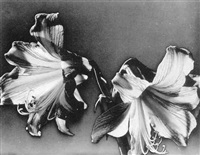 solarized flowers by carlotta m. corpron