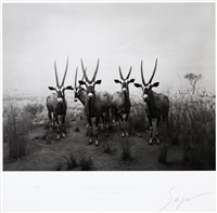 gemsbok (from end of time) by hiroshi sugimoto