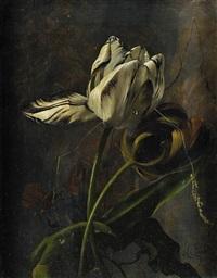 tulipes et brin d'herbe by arthur chaplin