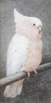 sulphur-crested cockatoos; cockatoo perching on a branch (2 works) by henry stacy marks