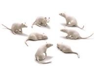 mice (7 works) by yoshimasa tsuchiya