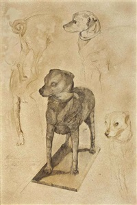 drawings of the stuffed dog by daniel quintero