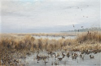 mallards in flight in a marshy landscape by george edward lodge