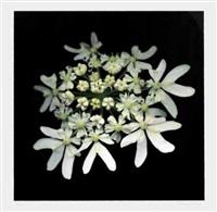 still life – fiori bianchi by guido anderloni