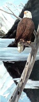 bald eagle by john aldrich ruthven