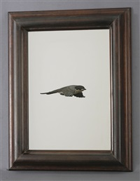 swallow in the frame by akio ohmori