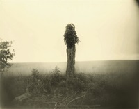 untitled (from mother land) by sally mann