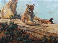 mountain lion by dennis anderson