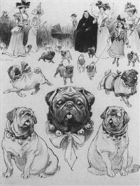 studies of pugs by christopher gifford ambler