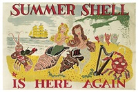 summer shell is here again by jack miller