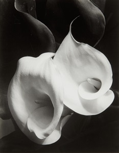 artwork by imogen cunningham