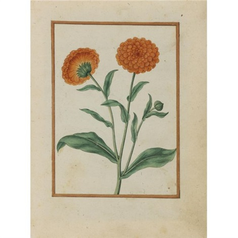 pot marigolds by jacques le moyne de morgues