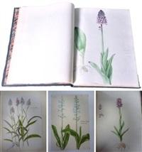 orchidées des environs d'angoulême d'après nature (alb. w/70 works) by eulalie arnaud