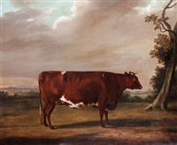 a prize shorthorn bull by william henry davis