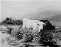highland cattle grazing by john w. perrin