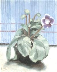 violetta by guglielmo janni