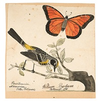 monarch butterfly and a bird by william bartram