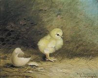 the newborn chick by ben austrian