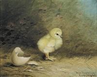 the newborn chick by ben austrian