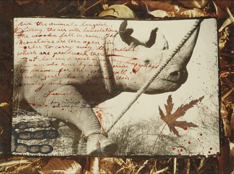 from the end of the game last word from paradise (rhinoceros) by peter beard