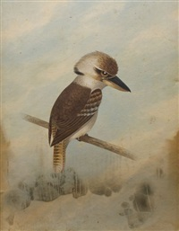 kookaburra by george fischer