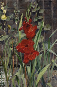 gladioli by willy fleur