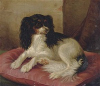 a king charles spaniel on a red cushion by herman freese