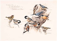 canadian chickadees, nuthatches and others by james fenwick lansdowne