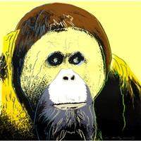 orang-utan by andy warhol