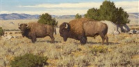 bison at slit rock by tucker smith
