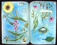 serie de los libros de botanica by eduardo gualdoni