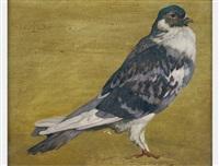 pigeon by maximilian lenz